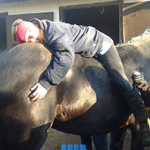 Horseboty session at the Sunshine Centre for Therapeutic Riding